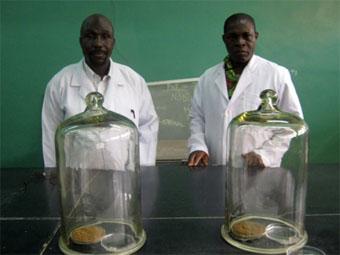 Ahammad Jibril and Bello Abdu