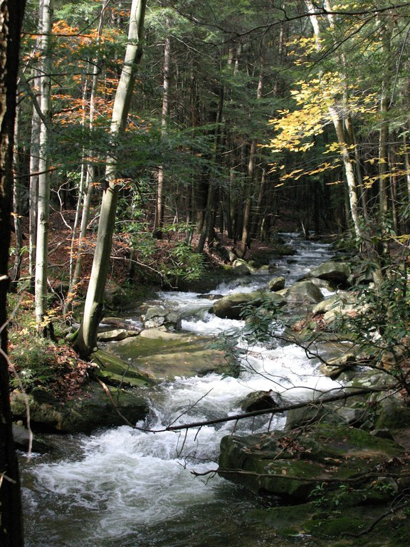 Forested stream