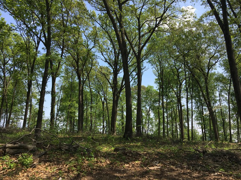 The Pennsylvania DCNR Bureau of Forestry has cer¬tified all of the state-owned forests – more than 2.2 million acres – to the SFI Forest Management stan¬dard, ensuring these forestlands are managed in an environmentally responsible manner.