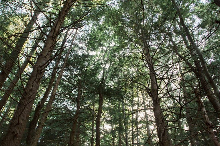 The SFI grant program provides strategies and benefits to forest landowners across the United States.