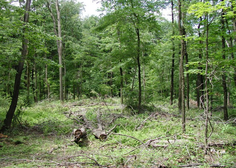 Results of a high-graded forest. (Photo by Jim Finley)
