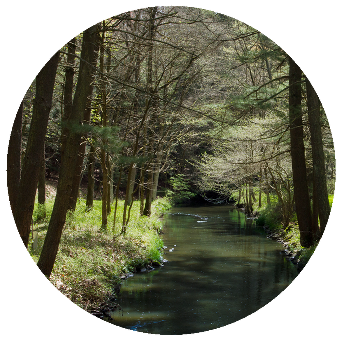 creekwoods.png