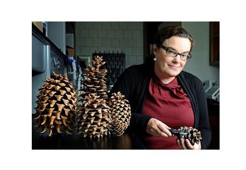 Dr. Jill Hamilton, Associate Professor of Restoration Genetics and and the new Director of the Schatz Center in Tree Molecular Genetics