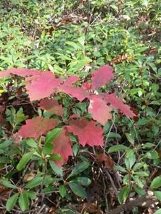 oak-seedling.jpg