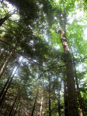 Katie Gaines tree Climbing