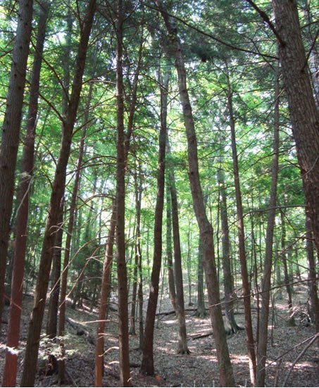 Forest on toe slope in Shale Hills CZO. How does topographical position affect carbon fluxes belowground?