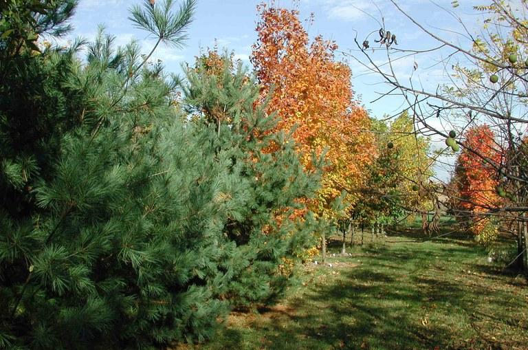 Common garden for belowground research