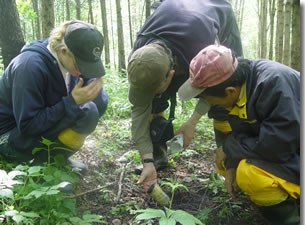 Examining a minirhizotron in a forest plantation in China with Jori Sharda (PhD candidate in IBIOS) and Zhengquan Wang