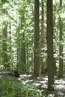 Forest Heterogeneity