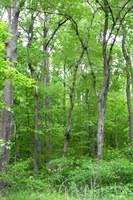 forest change